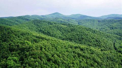 Kalker için 74 Bin Ağacı Kesecekler!