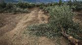 Soma'daki Araziyi Ranta Açmayın, Yeşil Alan Yapın