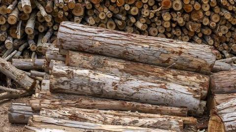Orman Ürünlerinde Fon Payı Sıfırlandı