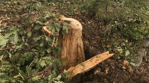 İBB'den Sarıyer'de Ağaç Kıyımı