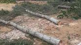 'Her Yıl Milyonlarca Ağaç Dikiyoruz. Üç Beş Ağacı Düşünmeyiz'