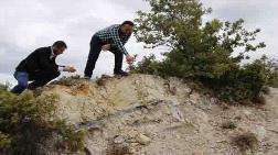 21 Milyon Yıllık Fosil Ağaç Ormanı 'Tabiat Anıtı' İlan Edilecek