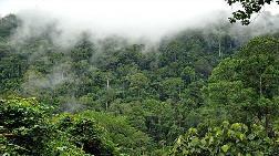 Yağmur Ormanlarında Dünyanın En Büyük Ağaçlandırma Projesi