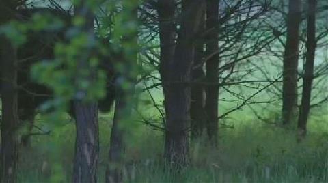 Ağaç Kesmeye Devam Ederse Günde 100 Bin Euro Ceza Ödeyecek