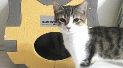 Kediler Üşümesin Diye Isı Yalıtımlı Kedi Evleri