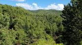 Orman Alanları İçin Yerleşimlerin Önünü Açan Düzenleme