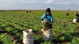Genç Çiftçi Desteği İçin Son Gün 30 Nisan