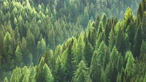 Orman İmarı Şimdilik Torbadan Çıktı