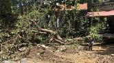Asırlık Ihlamur Ağacı Plansız Çalışma Kurbanı