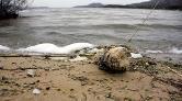 Bafra Gölü Kuraklık ve Kirlilik Tehdidi Altında