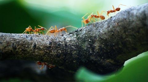 Girişimciler İçin Ücretsiz Biyomimikri Eğitimi