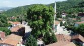 1226 Yaşındaki Çınar Ağacı, Koruma Altında