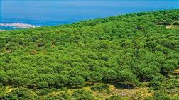Orman Sınırları Dışına Çıkarılan Alanlar Satılacak