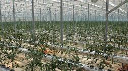 Van'da Jeotermal Elektrik Santrali Kuruluyor