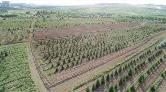 Atatürk Orman Çiftliği ile Orman Genel Müdürlüklerinin Yapısında Düzenleme