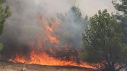 Göbeklitepe Çevresindeki Ormanlık Alanda Yangın