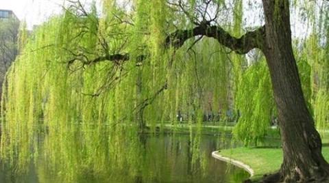 Nakkaştepe'ye Millet Bahçesi Yapılıyor