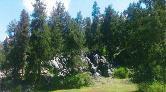 Mermer İçin 3 Bin Ardıç Ağacı Kesilecek