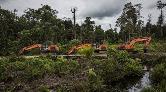 Palm Yağı İçin İstanbul Büyüklüğünde Yağmur Ormanı Yok Edildi
