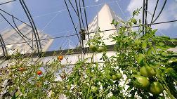 Paris'in Çatılarında 'Kentsel Tarım'