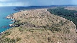 Kesilen Ağaç Sayısı 650 Bini Aştı