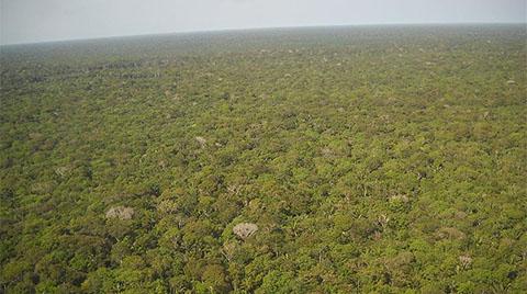 Amazon Ormanları'nda Büyük Kayıp