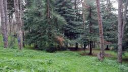 Atatürk Köşkü Ormanı Kurudu