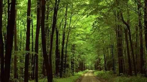 Orman ve Meralara Zarar Verecek Torba Kanun Teklifi
