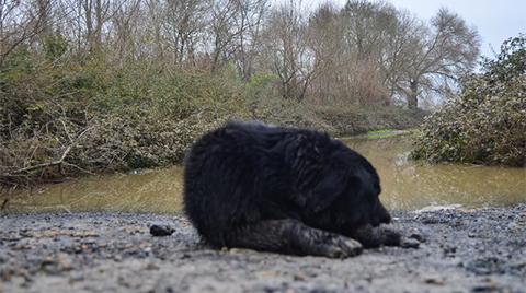 Kemerburgaz'da Sel Sonrası Acı Manzara