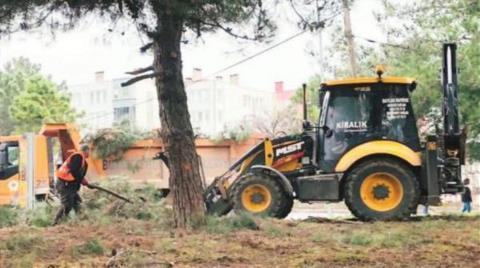 Samsun'da Ağaç Kesimine Tepki