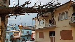İzmir'de Anıt Ağaç Evin Çatısına Devrildi