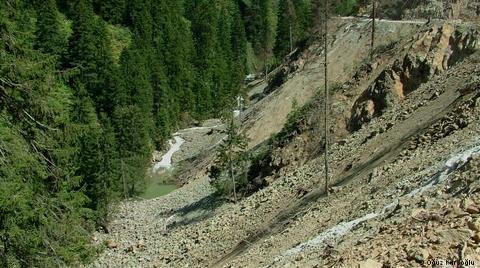 Türkiye'de Fidanlar Artıyor Ormanlar Azalıyor