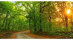Belgrad Ormanı Milli Park Mı Oluyor?
