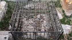 Tarihi Mozaik Çöpten Görünmüyor