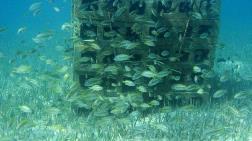 Bakan Pakdemirli: Balıklara TOKİ Yapıyoruz