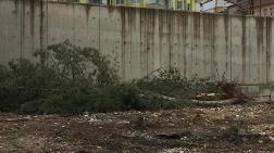 50 Yıllık Ağaçların Kesilmesine Büyük Tepki