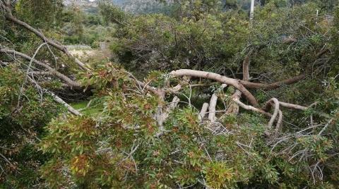 Dünyaca Ünlü Akbük Koyu'nda Ağaç Katliamı