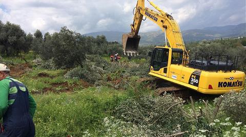 Ödemiş'te Zeytin Ağacı Katliamı