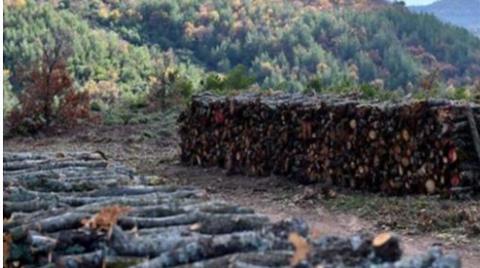 Kaz Dağları'nda Ağaç Katliamı