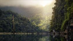 Amazonlar İçin Korkutan Rapor
