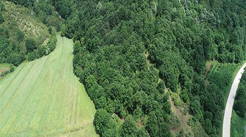 """""""Kuzey Ormanları Tümüyle Muhafaza Ormanı İlan Edilsin"""""""
