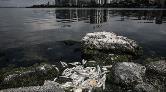 Tarım Bakanlığı'ndan Balık Ölümlerine İlişkin Açıklama
