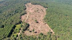 Kemerburgaz'da Binlerce Ağaç Kesildi