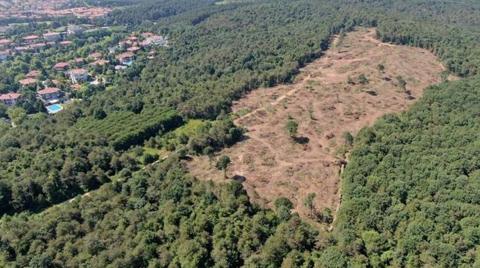 """Tarım ve Orman Bakanlığı'ndan """"Kesilmiş Ağaçlar""""a Dair Açıklama"""