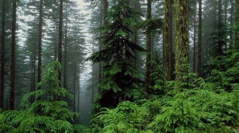 Ormana Taşocağı Tehdidi
