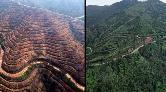 Çamburnu Tabiat Parkı Ormanından İyi Haber