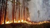 """""""İhmal ve Rant Ormanları Kül Etmesin"""""""