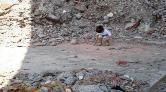Kirazlıtepe'de Zoraki Dönüşüm