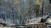 10 Yılda 83 Bin 557 Futbol Sahası Büyüklüğünde Orman Yandı