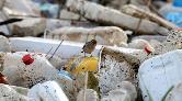 Tek Kullanımlık Plastiklerin Yasaklanması İçin 200 Bine Yakın İmza